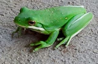 JoyfulBusiness.com.Frog 3.2012