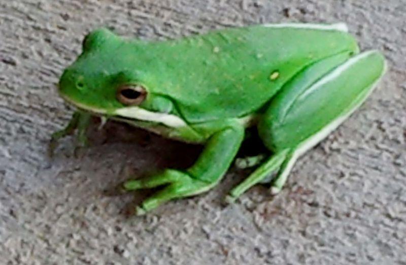 JoyfulBusiness.com.Frog 3.2012